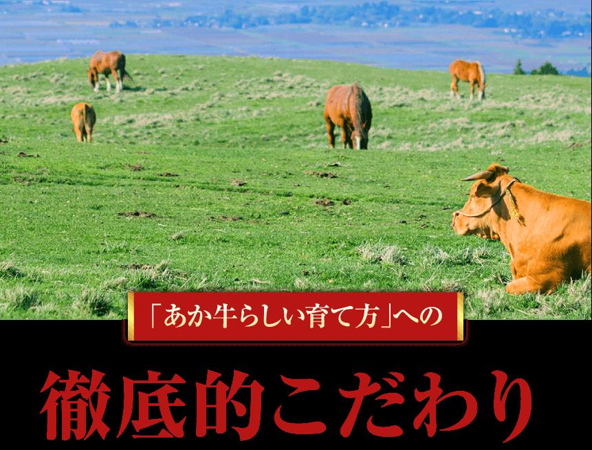 熊本 ブランド和牛 あか牛 徹底的こだわり