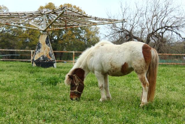 小柄でスリムな軽種馬とは? | ...
