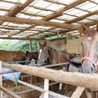 実はほとんど流通しない「熊本県産」の馬刺し。年間生産数は数百頭だけ!?