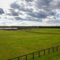 「国産」の馬刺しの生産の流れ